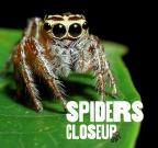 Spiders CloseUp
