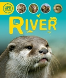 Life Cycles: River PB