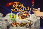 Dig It Up! Real Fossils