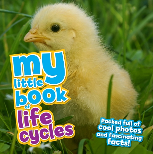 My Little Book of Life Cycles                                                                        - Book