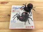 Salt Water Spider