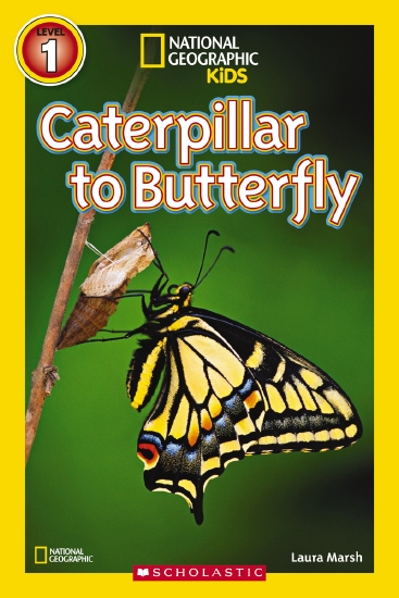 NATIONAL GEOGRAPHIC READERS: CATERPILLAR TO BUTTERFLY LVL 1